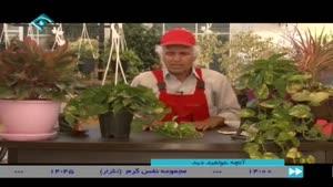 آموزش کاشت گیاه دلبر