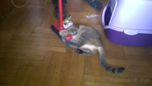 درگیری گربه ها با جارو