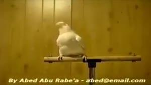 طوطی رقاص خیلی باحاله