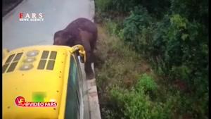 حمله فیل وحشی به دو خودرو