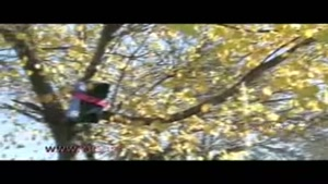 اختراع دستگاه لرزش درختان به دست مخترع اردبیلی