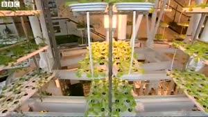 فیلم/ کشاورزی مدرن در ساختمان را تماشا کنید
