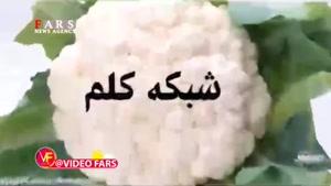 گاف بد مجری شبکه کلمه درباره خبرگزاری فارس