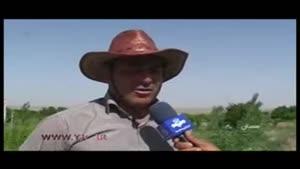 خسارت سنگین ۱۳۰ میلیارد تومانی به کشاورزان