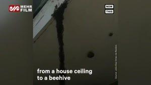 پل مورچه ای را ببینید