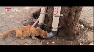 کمک جالب مردم سوریه به گربه های خیابانی!