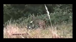 انتقام سختی که گوزن از شکارچی میگیرد