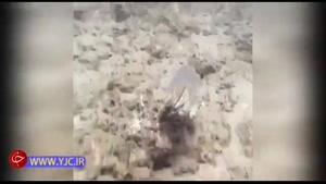 ویدئویی زیبا از رنگ عوض کردن اختاپوس