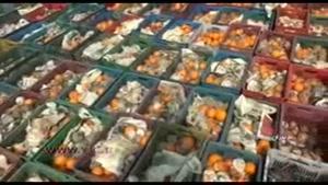 پوسیدن دو هزار تن پرتقال در یک انبار