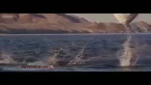 کلیپ نادیده و نایاب رقص سفره ماهی ها در آب های نقره ای