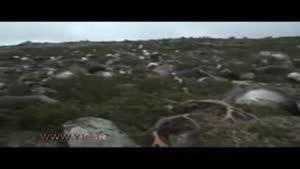 صاعقه ۳۲۳ رأس گوزن را تلف کرد