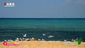 جاذبههای گردشگری جزیره کیش