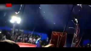 حمله خرس به یک مرد در سیرک !