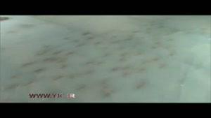 تعطیلی پیست اسکیت به خاطر استفاده از ماهیان یخ زده