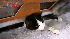 نجات گربه بازیگوش توسط آتش نشانان مشهدی/فیلم