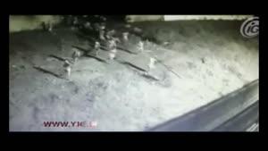 فرار دسته جمعی زندانیان از روی دیوار زندان