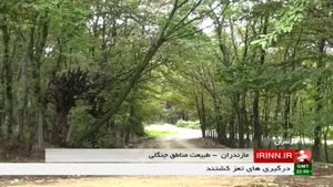 طبیعت مناطق جنگلی
