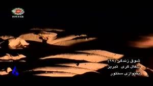 سفالگری تبریز.