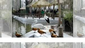 اصفهان- باغ پرندگان