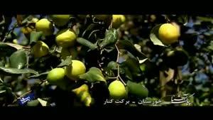 پیک آشنا (خوزستان - برکت کنار)