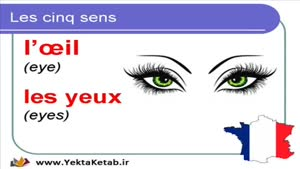 آموزش زبان فرانسه - کلمات حواس پنجگانه -درس هفدهم