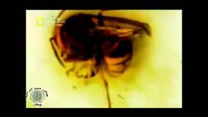 مستند زنبور سرخ