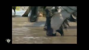مستند حیوانات شکاری کروکدیل قسمت ۲