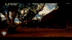 مستند افعی مرگ صحرایی