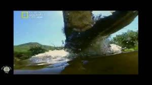مستند حیوانات شکاری کروکدیل قسمت ۱