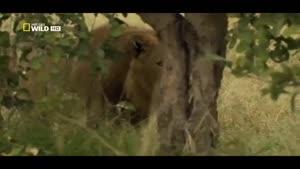 مستند جغرافیای ملی - سیاره حیوانات قسمت سوم