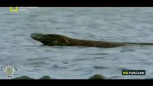 مستند اژدها های مرگبار کومودو قسمت چهارم