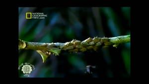 مستند زنبور اجتماعی گوشتخوار
