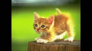 ترانه کودکانه گربه ملوس