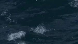 مستند دنیای پرندگان شکاری قسمت دوم مرغان دریایی
