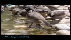 مستند پرندگان در سرزمین برف و آفتاب - قسمت ۹