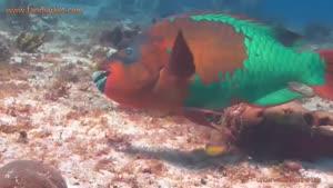 مستندی زیبا از زندگی در زیر آب