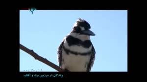 مستند پرندگان در سرزمین برف و آفتاب - قسمت ۶