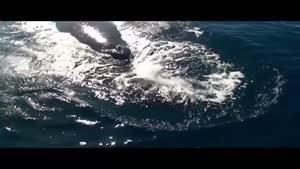 مستند زیبا از جهان زیر آب قسمت ۳