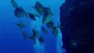 مستند زیبا از جهان زیر آب قسمت ۷