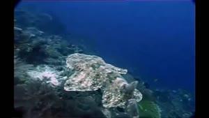 مستندی زیبا از دنیای زیر آب قسمت ۳