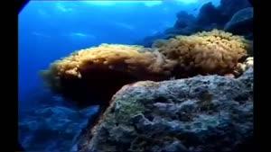 مستندی زیبا از دنیای زیر آب قسمت ۴