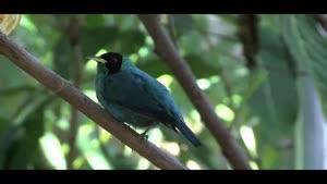 آرامش موسیقی و پرندگان زیبا از جهان