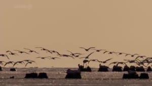 مستند دنیای پرندگان شکاری قسمت ۳ فلامینگو