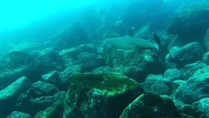 غواصی در اقیانوس ها در گالاپاگوس