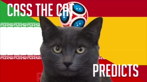 گربه پیشگو جام جهانی روسیه برد اسپانیا را در مقابل ایران پیش گویی کرد