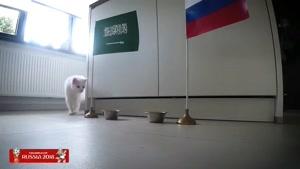 گربه پیش گو جام جهانی روسیه برد عربستان را در مقابل روسیه  پیش گویی کرد