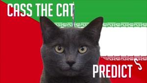 گربه پیشگو جام جهانی روسیه برد ایران را در مقابل مراکش پیش گویی کرد