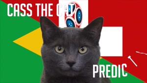 گربه پیشگو جام جهانی روسیه برد برزیل را در مقابل سوئیس پیش گویی کرد