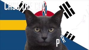 گربه پیشگو جام جهانی روسیه برد کره جنوبی را در مقابل سوئد پیش گویی کرد