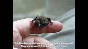 ۱۰ حیوان کوچک در جهان